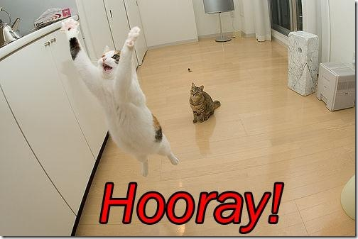 cat saying yay